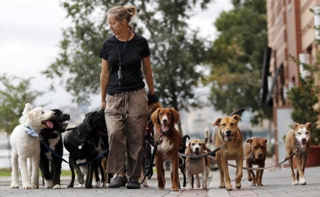 Предложение: оборудовать во дворах новостроек площадки для выгула собак