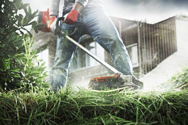Предложение: изымать участки за мусор и заросли травы