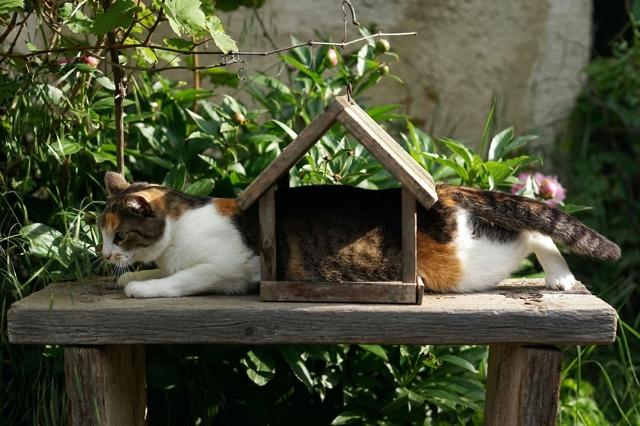 Взять ипотеку на загородное жилье по-прежнему сложно