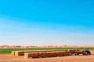 Предложение: изымать неиспользуемые сельхозземли через 2 года