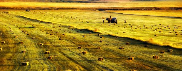 Госдума одобрила облегченный порядок выкупа земель для садоводов