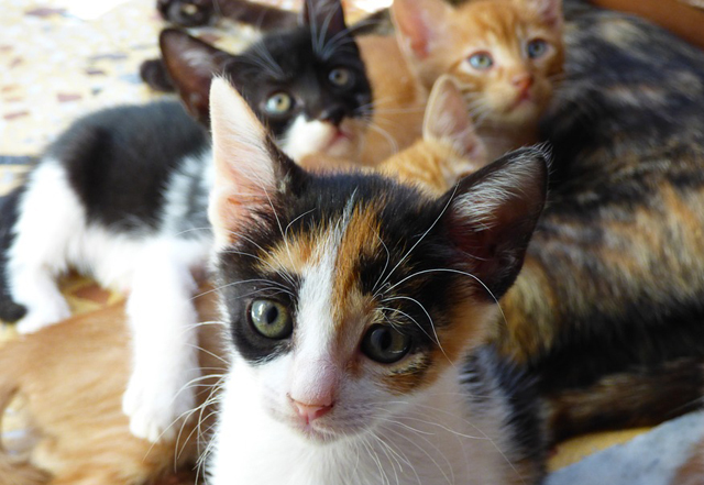 Что изменится в квартире, если вы заведете кошку?