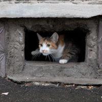 Подвалы новостроек обеспечат проходами для кошек