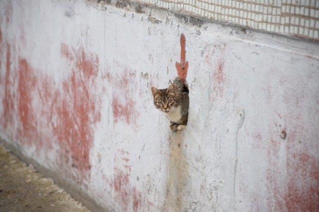 В Москве могут появиться теплые домики для кошек в подвалах многоэтажек