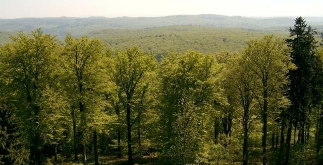 Эксперты критикуют законопроект о лесной амнистии